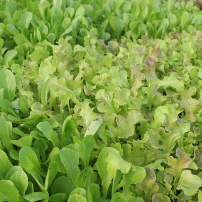 Pictures of Leafy Greens