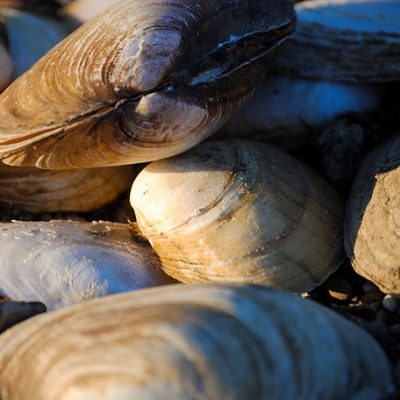 Pictures of Shellfish
